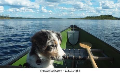 dog on canoe at finnish lake