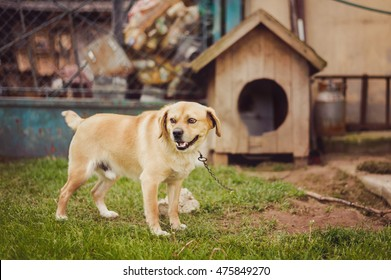 Dog on chain, doghouse, rural environment.