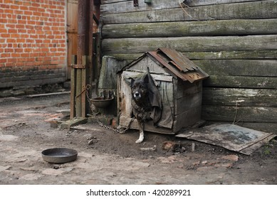 dog on a chain, the dog next to the booth, the dog in the yard