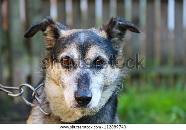 Dog on the chain portrait