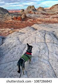 Dog on the cliff. White Pocket, Arizona, USA