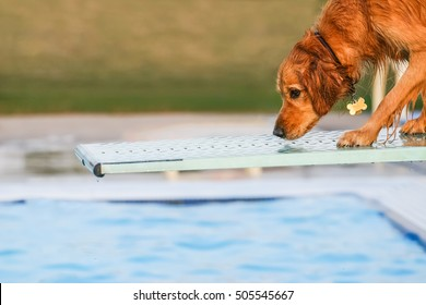 Dog on a diving board