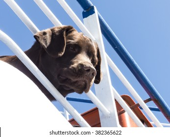 Dog on a ferry boat looking trough a railing against blue sky.
