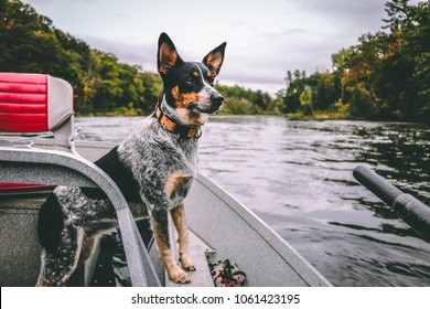 Dog on the Fly Boat