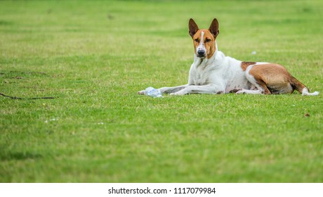 The Dog on Green grass