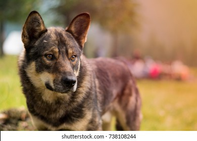 Dog on green grass, outdoors. Dog outdoors. Dog portrait