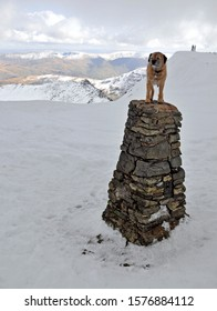 Dog on Helvellyn's trig point (Lake District, England) on a beautiful winter's day. Walkers visible on summit in distance, with Striding Edge prominent.