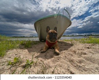 Dog on holiday - light brown French bulldog lying on the lakeshore in the shadow of the boat, a cloudy sky above him