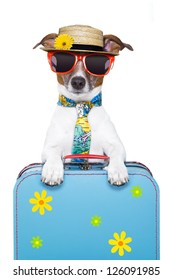 dog on holidays with luggage ,funny tie and hat