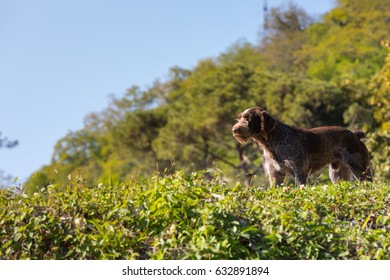 Dog on the hunt on a sunny day