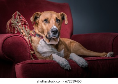 A dog on laying on a pillow in an armchair looking straight