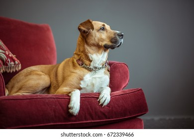 A dog on laying on a pillow in an armchair looking out of the window