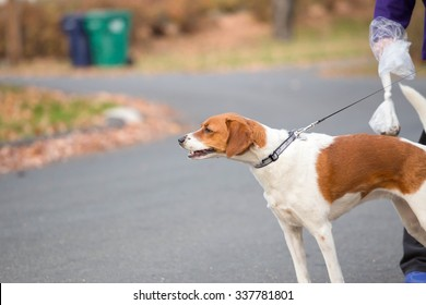 a dog on a leash walking down a street with it's owner holding a clear dog waste bag