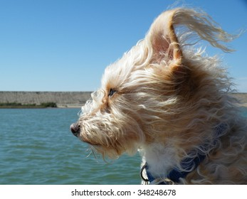 """Dog on the lookout at sea - """"Salty Dog"""""""