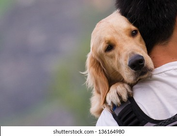 Dog on a man shoulders