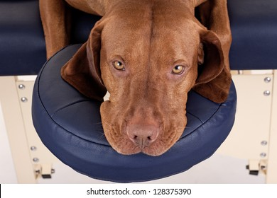 dog on massage table looking at the viewer