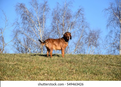A dog on a meadow during autumn sun
