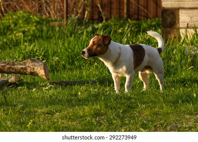 dog on the nature