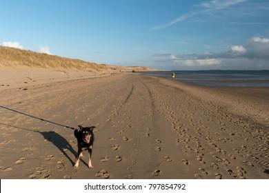 Dog on the North Frisian Island Amrum in Germany