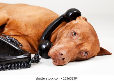 dog on the old phone