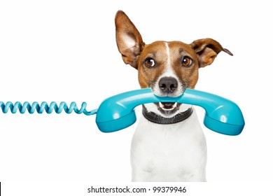 dog on the phone and looking th the side