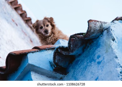 Dog on Roof Top, Blue Stone Building in Chefchaouen Medina, Morocco