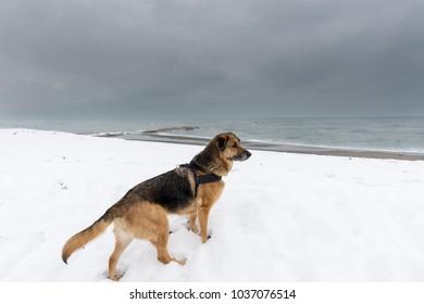 Dog on snow near the sea