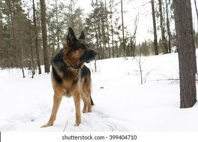 Dog on snow in winter day
