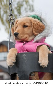 A dog is on a swing in a park.