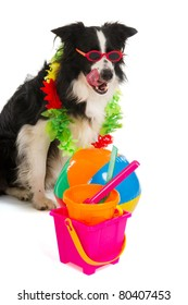Dog on vacation with plastic toys and flower garland