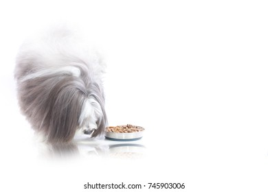 A dog on a white isolated background with a bowl of food.