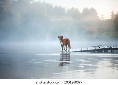 dog on the wooden bridge on the lake. Pet on the nature