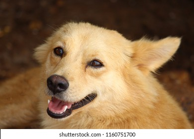 Puppy Phots Images Stock Photos Vectors Shutterstock Fotor's collage maker helps you create photo collages online for free now. https www shutterstock com image photo dog opened mouth 1160751700