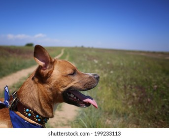 Dog outdoors hiking mixed breed rescue puppy on a sunny day in park