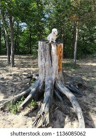 dog over the stump