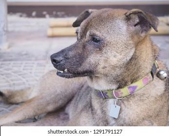 The Dog overbite.