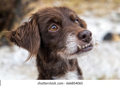 dog with overbite
