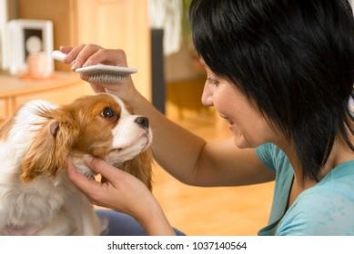 Dog owner brushes her dog