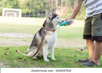 Dog owner give a water for a dog in the park.