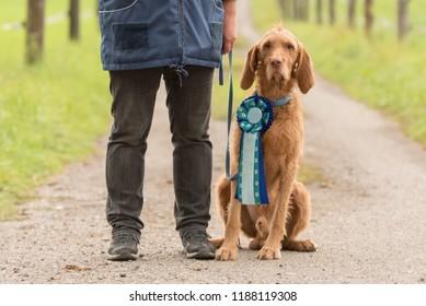 Dog owner and his winner dog, Magyar Vizsla