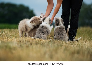 Dog owner with a litter puppies