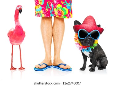 dog and owner ready to go on summer vacation holidays and a gay pink flamingo , isolated on white
