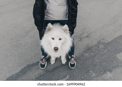 Dog with owner. Samoyed dog. Pet in town. Dog looking up at the owner