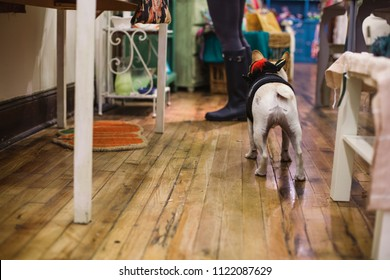 Dog with owner in a shop