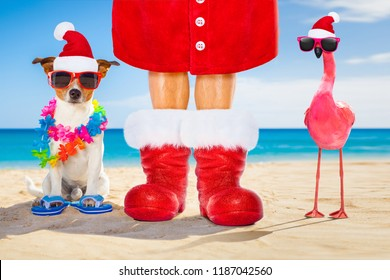 dog and owner sitting close together at the beach on summer christmas vacation holidays, wearing a santa claus hat and red boots and a pink flamingo