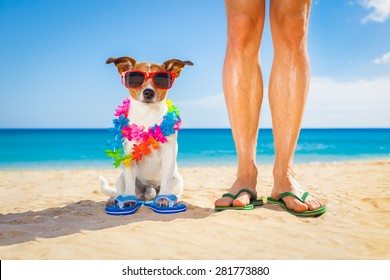 dog and owner sitting close together at the beach on summer vacation holidays, close to the ocean shore