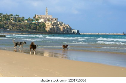 Dog paradise. Three dogs on Beach in Charles Clore Park. Tel Aviv, Israel