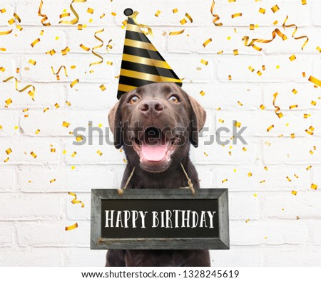09f4e062c Dog with party hat says happy birthday text board around his neck with  congratulations quote with