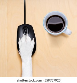 dog paw clicking on a pc computer mouse, searching , and looking online in internet finding information , isolated on wood desk
