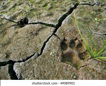 dog paw footprint close up in cracked dry ground